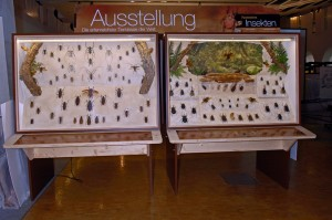 Some of Werner Bohren's Insect displays